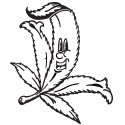 Cartoon Pot Leaf
